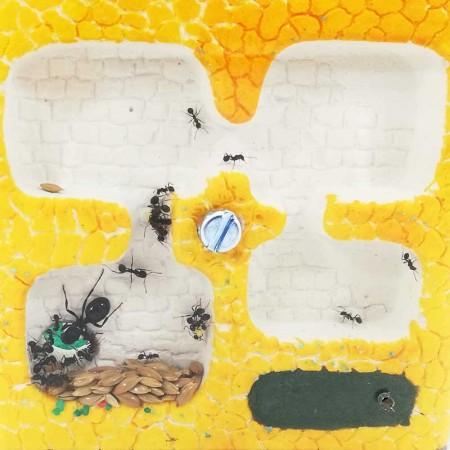 hormigueros artesanales con galerías profundas para facilitar la movilidad de las hormigas