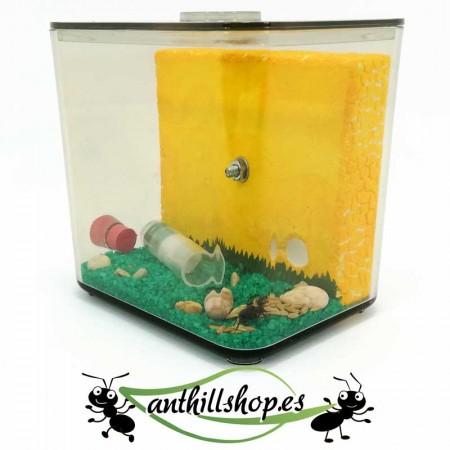 caja de forrajeo con orificio para conectar otros hormigueros