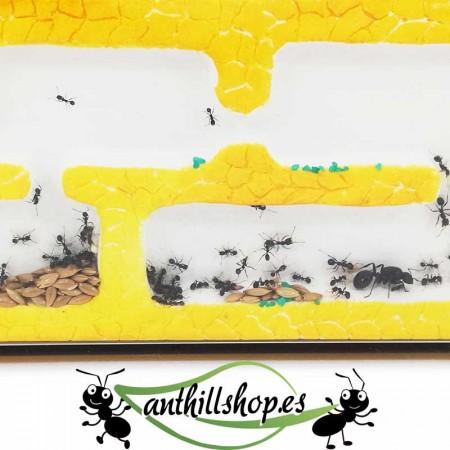 galerías de más de 1 cm de profundidad para la movilidad de las hormigas