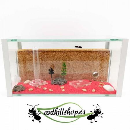 granja de hormigas educativo