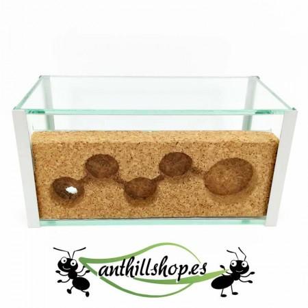 galerías de corcho para hormigas