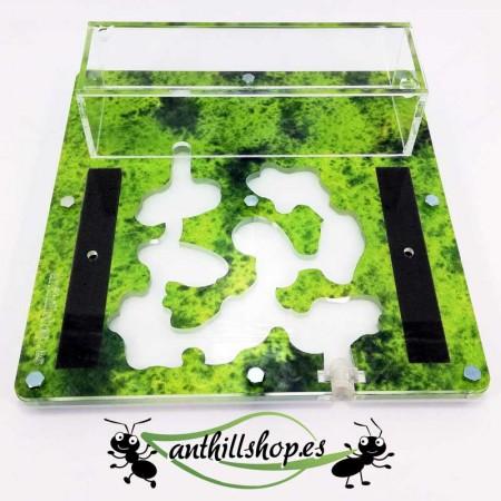 Hormigueros 15x15 espuma educativo de color verde