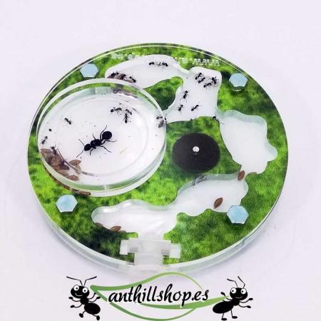perfecto para criar hormigas