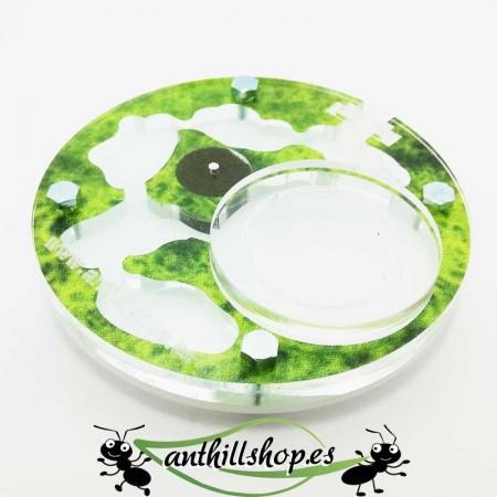 hormigueros con estampados verde