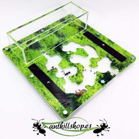 kit hormigueros 15x15 color verde con hormigas gratis