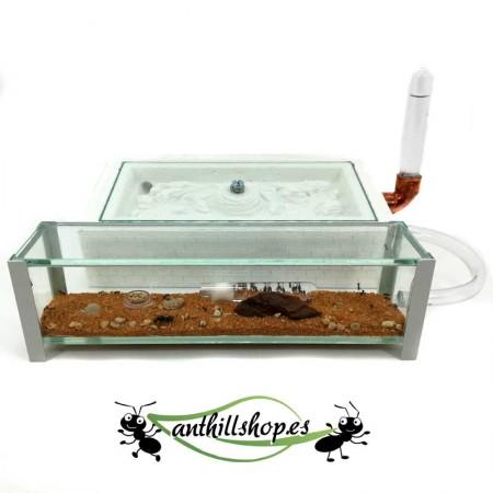 caja de forrajeo de cristal con tapadera para las hormigas