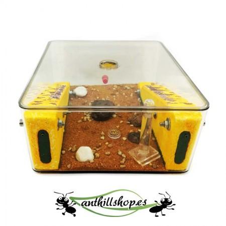 hormigueros con caja de forrajeo grande integrada en el centro