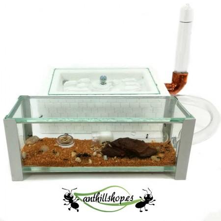 hormigueros artesanales con caja de forrajeo de cristal