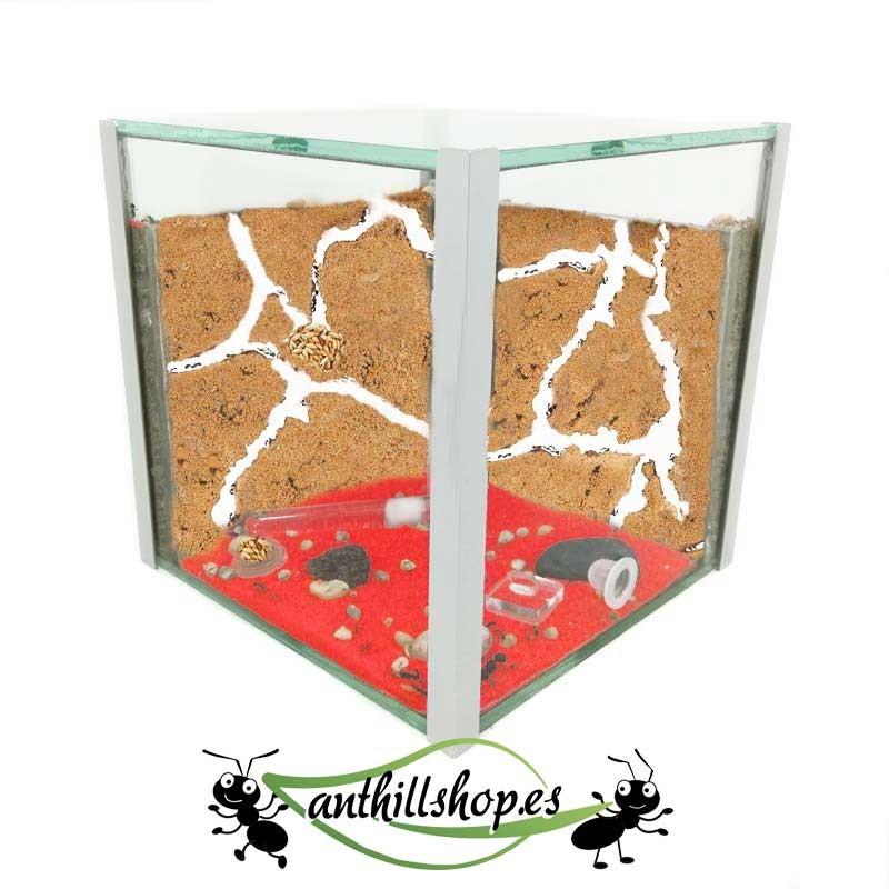 kit hormigueros cubo 15x15 cristal