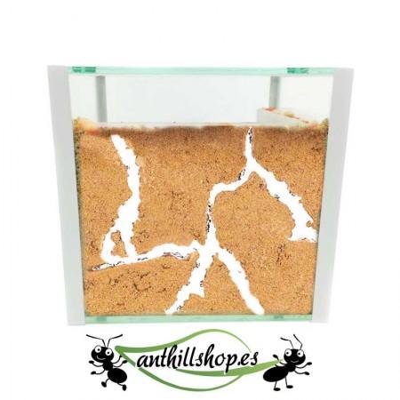 kit hormiguero cubo 15x15 cristal con galerías naturales de arena natural