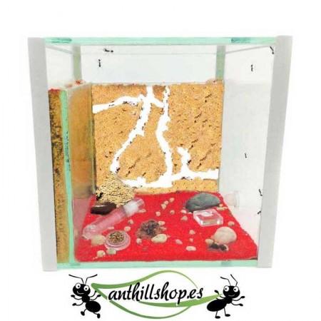 granja de hormigas cubo 15x15 de cristal  con dos zonas para las galerías independientes