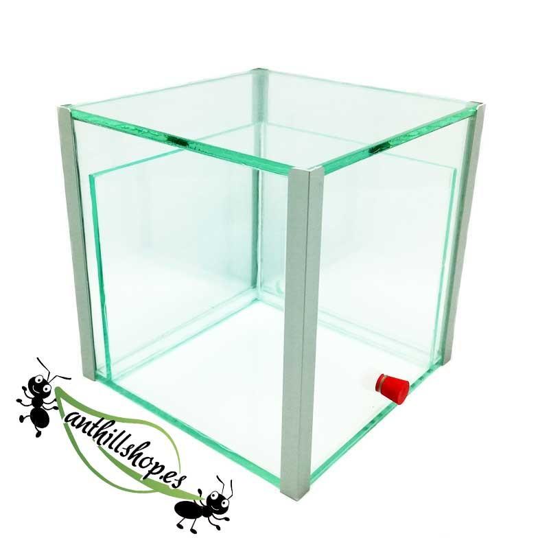 hormigueros cubo 15x15x15 de cristal