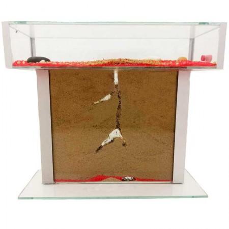 granja de hormigas en forma de T la caja de forrajeo en la parte superior y en la parte inferior sándwich de cristal