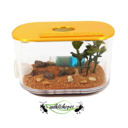 caja de forrajeo para hormigueros