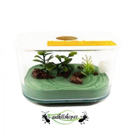 caja para las hormigas con tapadera antifugas