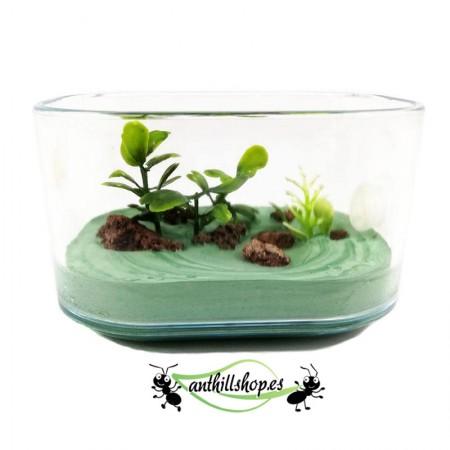 plantas y piedras integrada en la caja para las hormigas