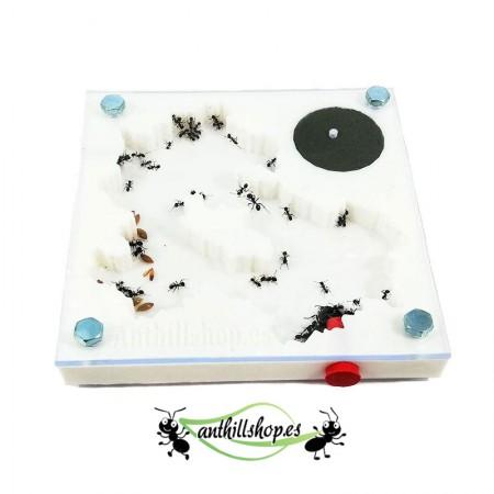 hormiguero 3d 7x7 cm para todas las especies de hormigas