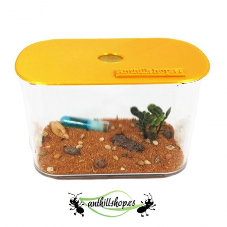 Perfecta caja de forrajeo para hormigueros