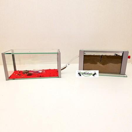 Kit hormigueros sandwich con caja de forrajeo de cristal