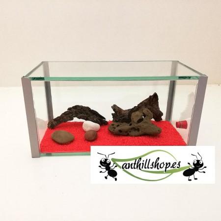 caja de forrajeo para hormigas