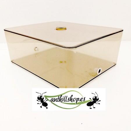 caja de forrajeo para hormigueros educativo