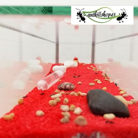 caja de forrajeo de cristal con piedras decorativas