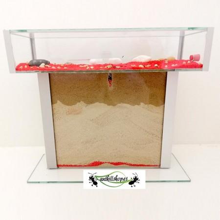 por la compra de tus hormigueros hormigas gratis