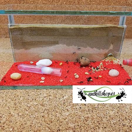 kit hormigueros de arena natural cristal 1