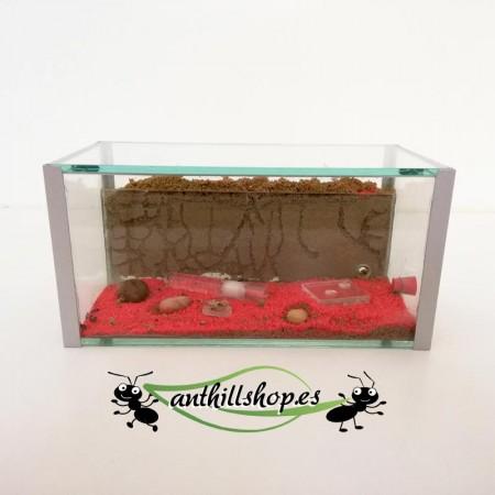 granja de hormigas de cristal con accesorios