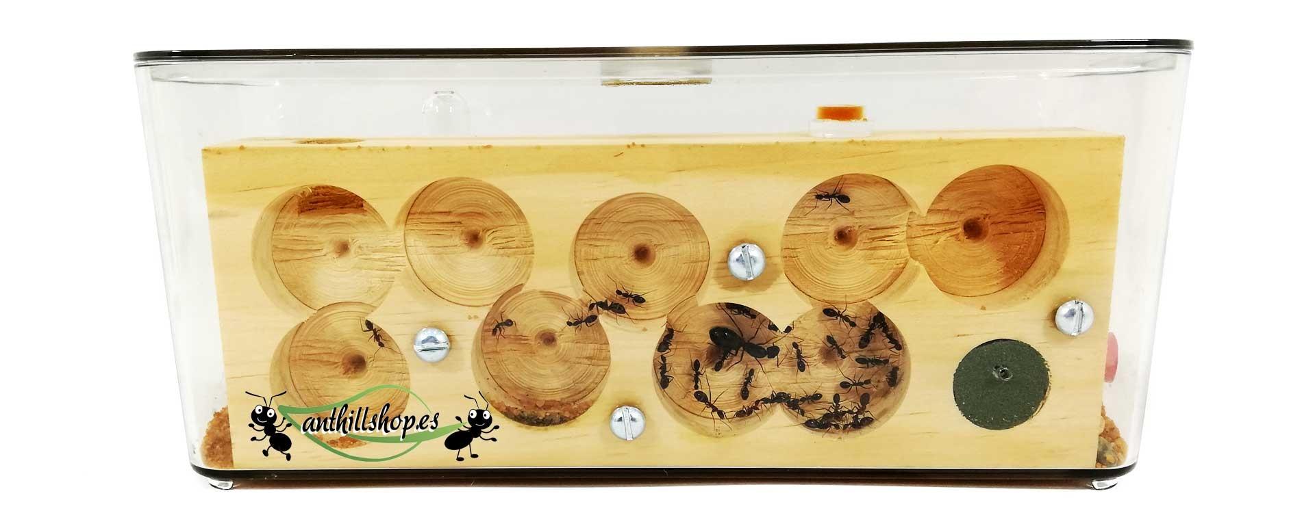 Hormigueros cubo acrílico de madera